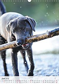 Hundepersönlichkeiten (Wandkalender 2019 DIN A3 hoch) - Produktdetailbild 6