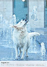 Hundepersönlichkeiten (Wandkalender 2019 DIN A3 hoch) - Produktdetailbild 8