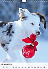 Hundepersönlichkeiten (Wandkalender 2019 DIN A4 hoch) - Produktdetailbild 12