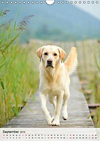 Hundepersönlichkeiten (Wandkalender 2019 DIN A4 hoch) - Produktdetailbild 9