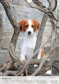 Hundepersönlichkeiten (Wandkalender 2019 DIN A4 hoch) - Produktdetailbild 1
