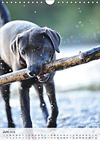 Hundepersönlichkeiten (Wandkalender 2019 DIN A4 hoch) - Produktdetailbild 6