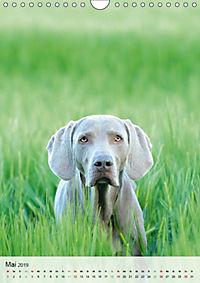 Hundepersönlichkeiten (Wandkalender 2019 DIN A4 hoch) - Produktdetailbild 5