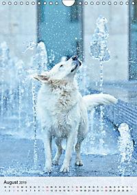 Hundepersönlichkeiten (Wandkalender 2019 DIN A4 hoch) - Produktdetailbild 8