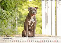 Hundeportraits 2019 (Wandkalender 2019 DIN A3 quer) - Produktdetailbild 9