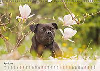 Hundeportraits 2019 (Wandkalender 2019 DIN A3 quer) - Produktdetailbild 4