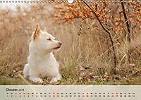 Hundeportraits 2019 (Wandkalender 2019 DIN A3 quer) - Produktdetailbild 10