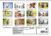 Hundeportraits 2019 (Wandkalender 2019 DIN A3 quer) - Produktdetailbild 13