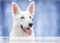 Hundeportraits 2019 (Wandkalender 2019 DIN A3 quer) - Produktdetailbild 1