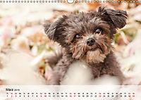 Hundeportraits 2019 (Wandkalender 2019 DIN A3 quer) - Produktdetailbild 3