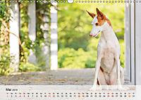 Hundeportraits 2019 (Wandkalender 2019 DIN A3 quer) - Produktdetailbild 5