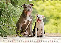 Hundeportraits 2019 (Wandkalender 2019 DIN A3 quer) - Produktdetailbild 7
