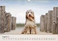 Hundeportraits 2019 (Wandkalender 2019 DIN A3 quer) - Produktdetailbild 8