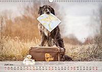 Hundeportraits 2019 (Wandkalender 2019 DIN A3 quer) - Produktdetailbild 6