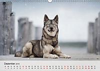 Hundeportraits 2019 (Wandkalender 2019 DIN A3 quer) - Produktdetailbild 12