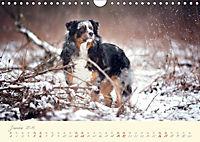Hundeseele (Wandkalender 2019 DIN A4 quer) - Produktdetailbild 1