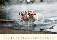 Hundeseele (Wandkalender 2019 DIN A4 quer) - Produktdetailbild 7