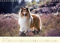 Hundeseele (Wandkalender 2019 DIN A4 quer) - Produktdetailbild 5