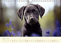Hundeseele (Wandkalender 2019 DIN A4 quer) - Produktdetailbild 4