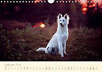 Hundeseele (Wandkalender 2019 DIN A4 quer) - Produktdetailbild 9