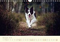 Hundeseele (Wandkalender 2019 DIN A4 quer) - Produktdetailbild 11