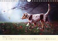 Hundeseele (Wandkalender 2019 DIN A4 quer) - Produktdetailbild 10