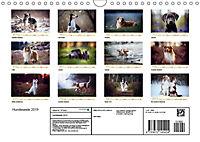 Hundeseele (Wandkalender 2019 DIN A4 quer) - Produktdetailbild 13