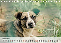 Hundisch (Tischkalender 2019 DIN A5 quer) - Produktdetailbild 10