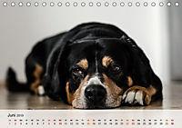 Hundisch (Tischkalender 2019 DIN A5 quer) - Produktdetailbild 6