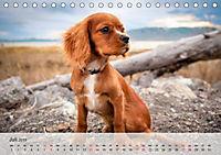 Hundisch (Tischkalender 2019 DIN A5 quer) - Produktdetailbild 7