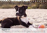 Hundisch (Tischkalender 2019 DIN A5 quer) - Produktdetailbild 9