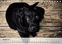 Hundisch (Tischkalender 2019 DIN A5 quer) - Produktdetailbild 1