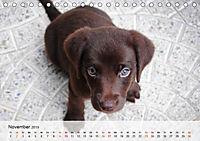 Hundisch (Tischkalender 2019 DIN A5 quer) - Produktdetailbild 11