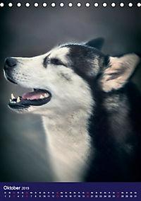 Huskies - Artwork (Tischkalender 2019 DIN A5 hoch) - Produktdetailbild 10