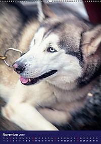 Huskies - Artwork (Wandkalender 2019 DIN A2 hoch) - Produktdetailbild 11