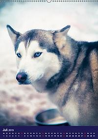 Huskies - Artwork (Wandkalender 2019 DIN A2 hoch) - Produktdetailbild 7