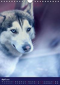 Huskies - Artwork (Wandkalender 2019 DIN A4 hoch) - Produktdetailbild 4