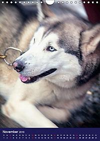 Huskies - Artwork (Wandkalender 2019 DIN A4 hoch) - Produktdetailbild 11