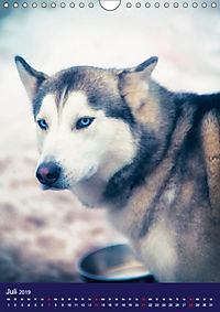 Huskies - Artwork (Wandkalender 2019 DIN A4 hoch) - Produktdetailbild 7