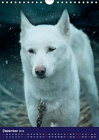 Huskies - Artwork (Wandkalender 2019 DIN A4 hoch) - Produktdetailbild 12