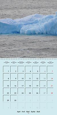 ICE (Wall Calendar 2019 300 × 300 mm Square) - Produktdetailbild 4