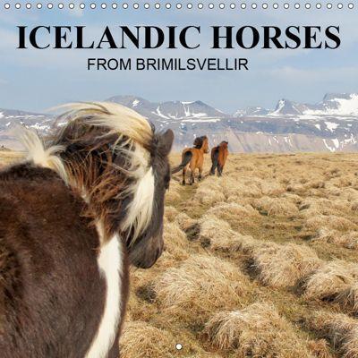 ICELANDIC HORSES from BRIMILSVELLIR (Wall Calendar 2019 300 × 300 mm Square), Jutta Albert