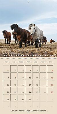 ICELANDIC HORSES from BRIMILSVELLIR (Wall Calendar 2019 300 × 300 mm Square) - Produktdetailbild 1