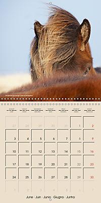ICELANDIC HORSES from BRIMILSVELLIR (Wall Calendar 2019 300 × 300 mm Square) - Produktdetailbild 6