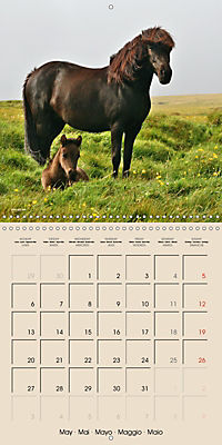 ICELANDIC HORSES from BRIMILSVELLIR (Wall Calendar 2019 300 × 300 mm Square) - Produktdetailbild 5