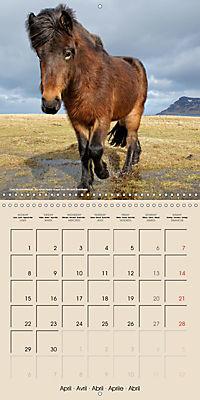 ICELANDIC HORSES from BRIMILSVELLIR (Wall Calendar 2019 300 × 300 mm Square) - Produktdetailbild 4