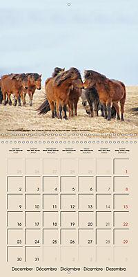 ICELANDIC HORSES from BRIMILSVELLIR (Wall Calendar 2019 300 × 300 mm Square) - Produktdetailbild 12