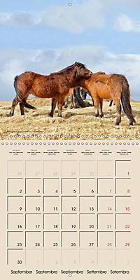ICELANDIC HORSES from BRIMILSVELLIR (Wall Calendar 2019 300 × 300 mm Square) - Produktdetailbild 9