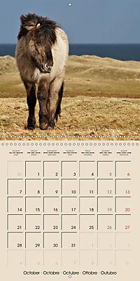 ICELANDIC HORSES from BRIMILSVELLIR (Wall Calendar 2019 300 × 300 mm Square) - Produktdetailbild 10
