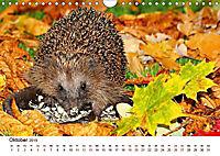 Igel 2019. Tierische Impressionen (Wandkalender 2019 DIN A4 quer) - Produktdetailbild 3